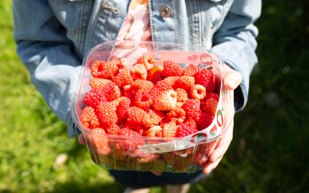 Pick you own fruit – Summer holiday activities Leeds